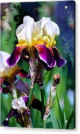 Colorful Iris Grandeur Acrylic Print by Karon Melillo DeVega