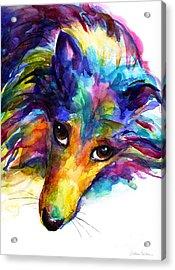 Colorful Sheltie Dog Portrait Acrylic Print by Svetlana Novikova
