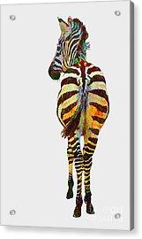Colorful Zebra Acrylic Print by Teresa Zieba