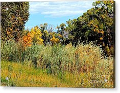 Colors Along The Gunnison Acrylic Print by Bob Hislop