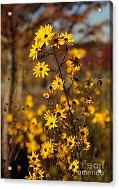 Colors Of Autumn Acrylic Print by Sabrina L Ryan