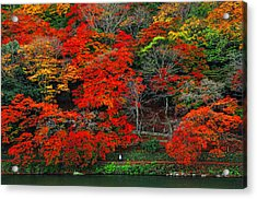 Colors Of Fall Acrylic Print by Midori Chan