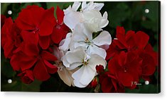 Colors Of Flowers Acrylic Print by James C Thomas