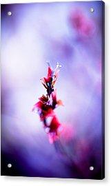 Comatose Acrylic Print by Shane Holsclaw