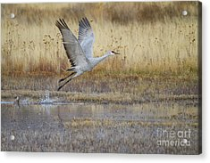 Come Fly With Me Acrylic Print by Ruth Jolly