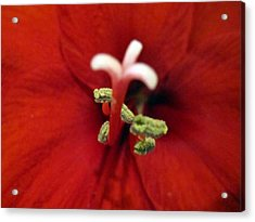 Come Hither Acrylic Print by Mike Podhorzer