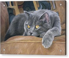 Comfortable Acrylic Print by Lucie Bilodeau