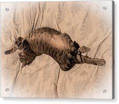 Comfy Cat Acrylic Print by Christy Usilton