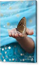 Common Crow Butterfly Acrylic Print by Tim Gainey