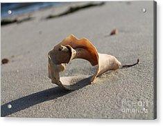 Conch On The Beach Acrylic Print by John Doble