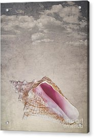Conch Shell On Vintage Background Acrylic Print by Jane Rix