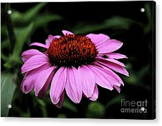 Coneflower With Bug Acrylic Print by Christiane Schulze Art And Photography
