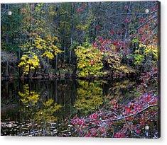 Congaree Swamp Acrylic Print by Skip Willits