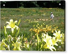 Consider The Lilies Of The Field Acrylic Print by Jean Hall