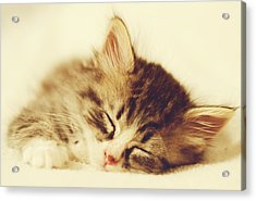 Content Kitty Acrylic Print by Pam  Holdsworth