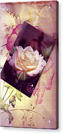 Continuation From Print To Photo Of White Rose Acrylic Print by Anne-Elizabeth Whiteway