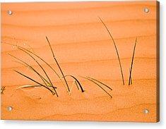 Coral Pink Sands 1 Acrylic Print by Adam Romanowicz