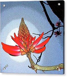 Coral Tree Acrylic Print by Ben and Raisa Gertsberg