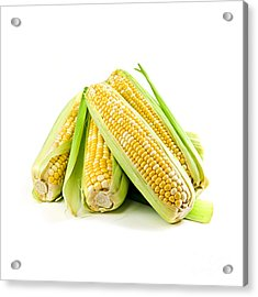 Corn Ears On White Background Acrylic Print by Elena Elisseeva