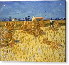 Corn Harvest In Provence Acrylic Print by Georgia Fowler