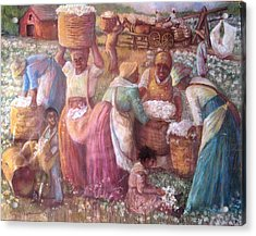 Cotton Fields Acrylic Print by Pamela Mccabe