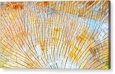 Cottonwood Acrylic Print by Brett Pfister