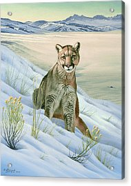 'cougar In Snow' Acrylic Print by Paul Krapf