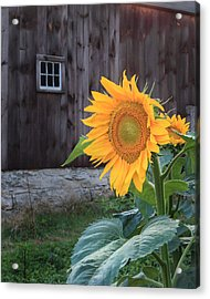 Country Flower Acrylic Print by Bill Wakeley