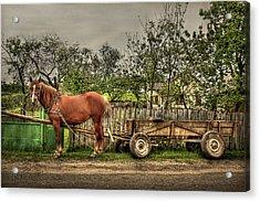 Country Life Acrylic Print by Evelina Kremsdorf