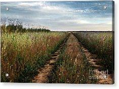 Countryside Tracks Acrylic Print by Carlos Caetano