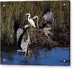 Courting Acrylic Print by Paulette Thomas