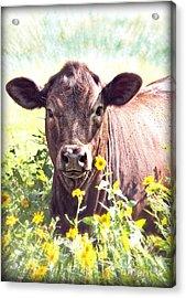 Cow In Wildflowers Acrylic Print by Ella Kaye Dickey