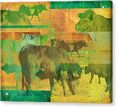Cow Pasture Collage Acrylic Print by Ann Powell