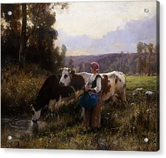 Cows At The Watering Hole Acrylic Print by Julien Dupre