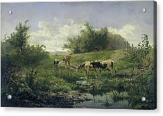 Cows In A Puddle, Gerard Bilders Acrylic Print by Litz Collection