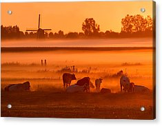Cows In The Mist Acrylic Print by Roeselien Raimond