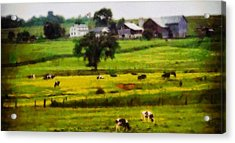 Cows On The Farm Acrylic Print by Dan Sproul