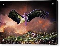 Crane The Lawyer Acrylic Print by Chris Lord