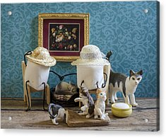 Crazy Cat Mallows Acrylic Print by Heather Applegate