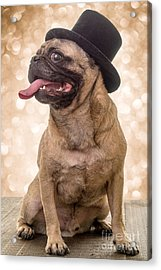 Crazy Top Dog Acrylic Print by Edward Fielding