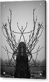 Creature Of The Wood Bw Acrylic Print by David Gordon