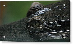 Croc's Eye-1 Acrylic Print by Gary Gingrich Galleries