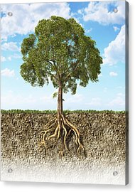 Cross Section Of Soil Showing A Tree Acrylic Print by Leonello Calvetti