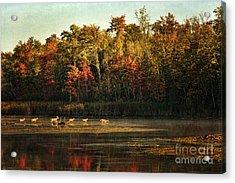 Crossing The Lake Acrylic Print by Cindi Ressler