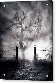 Crow Hallow Acrylic Print by Peter Chilelli