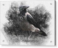 Crow Acrylic Print by Taylan Apukovska