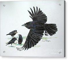 Crows Acrylic Print by Carol Veiga