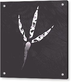 Crow's Foot Acrylic Print by Daniel Hapi