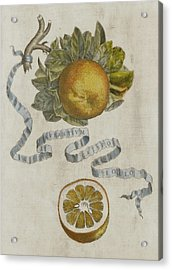 Curled Leaf Orange Acrylic Print by Cornelis Bloemaert