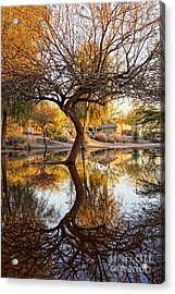 Curved Reflection Acrylic Print by Kerri Mortenson
